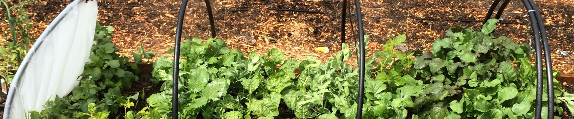 Companion Planting – Handyman's Free Guide Will Make Your Garden Thrive!