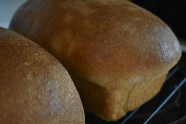 Fresh Whole Wheat Bread