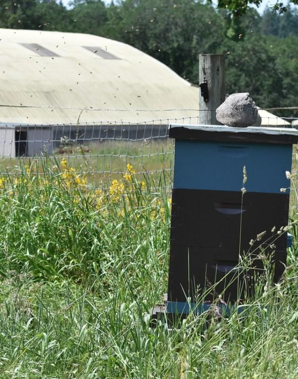 Better Beekeeping Through Better Record Keeping