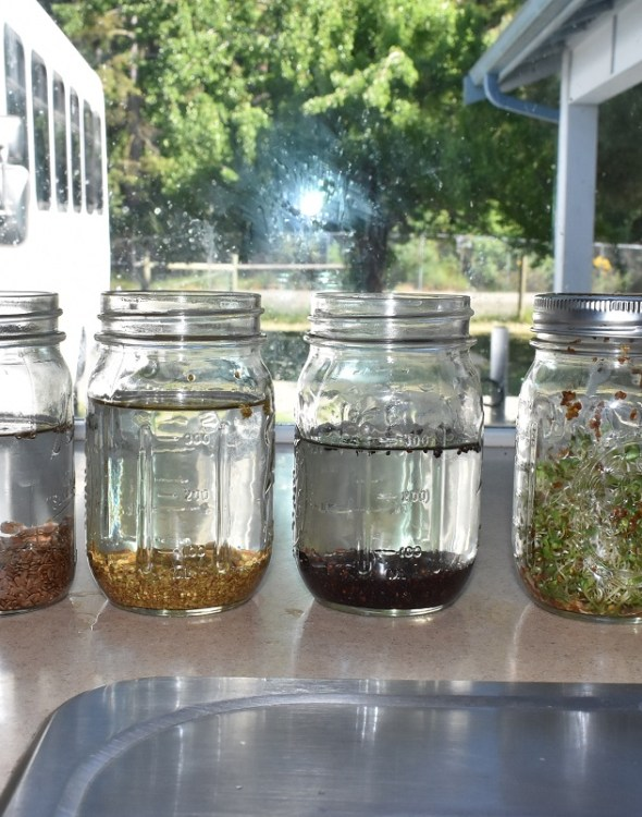 Growing Your Own Sprouts, Healthy and Easy, too!