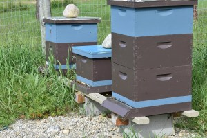 Rookie Beekeeper Mistake: Staying outside the hive
