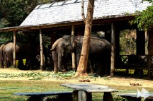 The Elephant Village's is providing a peaceful, safe home and sustainable future for elephants.