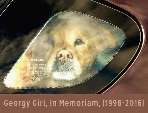 georgy girl in memoriam 1998 2016