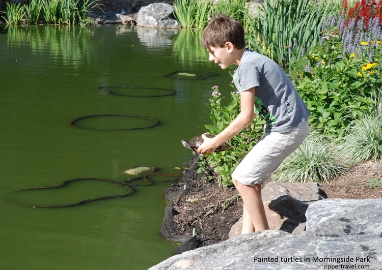 Boy with painted turtle Morningside Park Harlem NYC