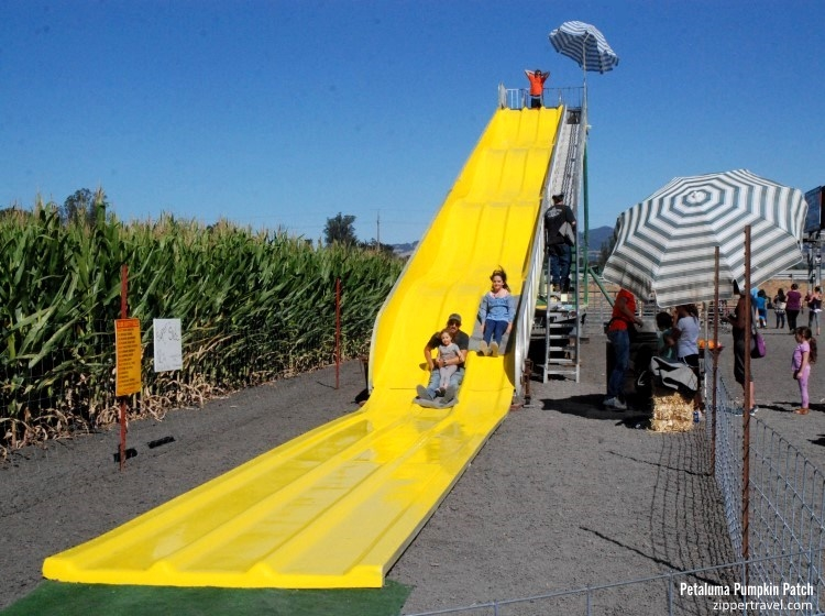 Petaluma Pumpkin Patch yellow slide