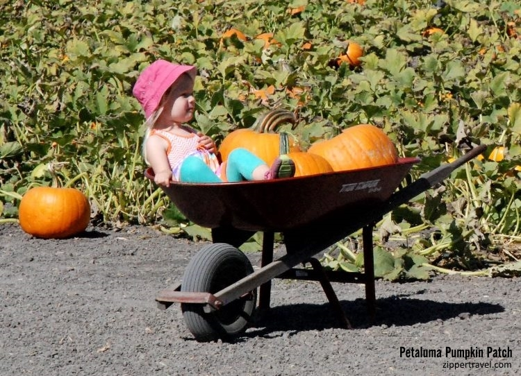 little girl pink hat wheelbarrow pumpkin patch