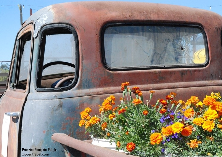 Pronzini Pumpkin Patch vintage rusted truck fall flower bed