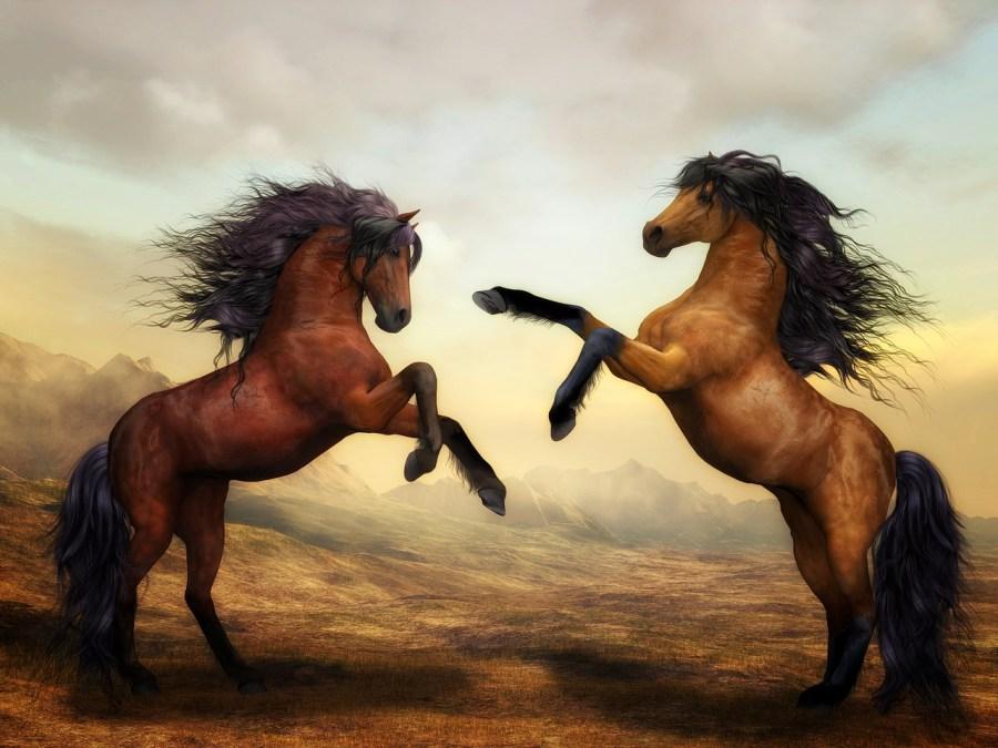 divoký kůň, návyky