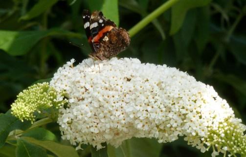Ein kleiner Schmetterling