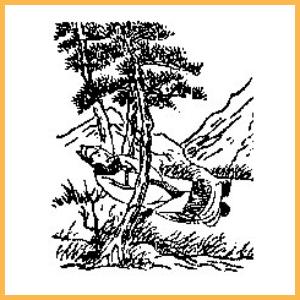《推背圖》第十一象 【興教門變從謙發】
