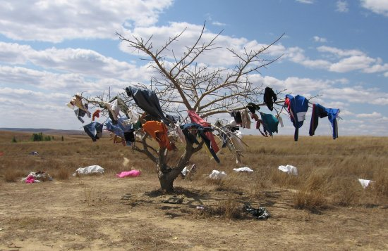 clothes on tree