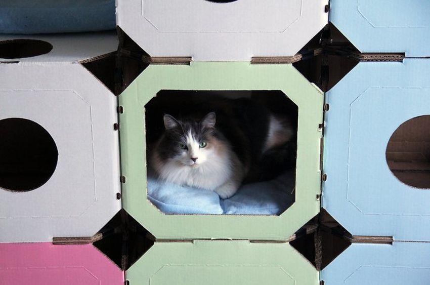 Koci dom z kartonowych pudeł