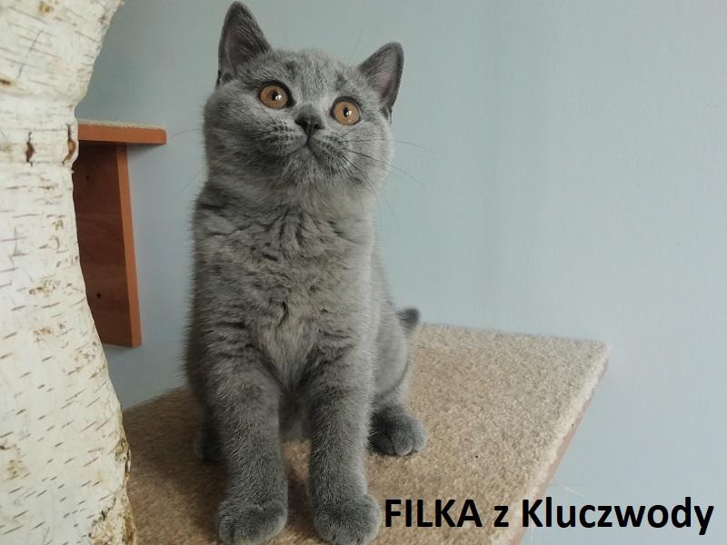 Obrazek posiada pusty atrybut alt; plik o nazwie FILKA2.jpg