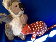 Koala and Tiger Quoll, endangered Australian species