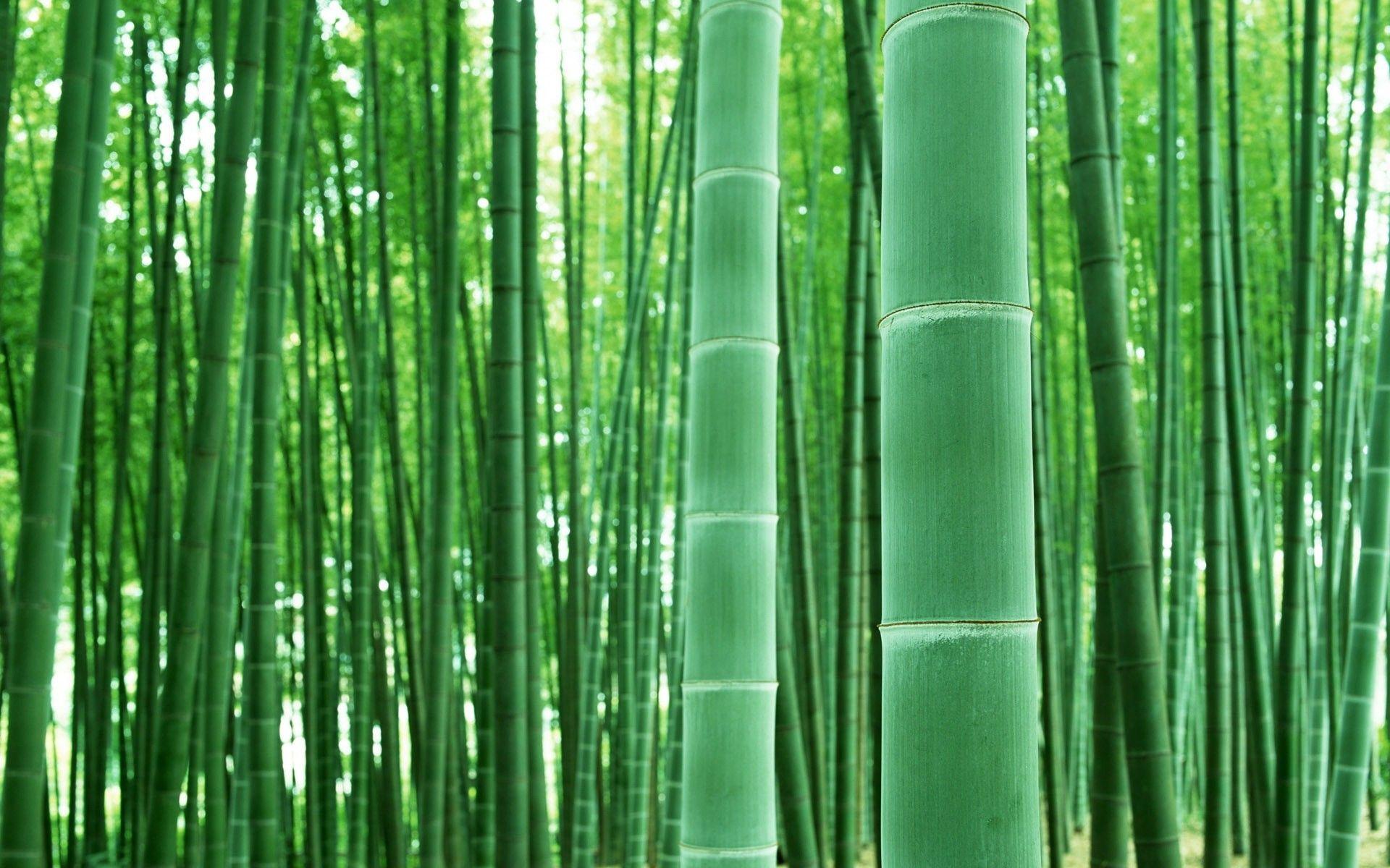bamboo-zlcopenhagen-sunglasses