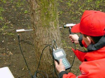 обследование деревьев_2