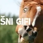 Smešni gifi (animacije) za smeh in solze
