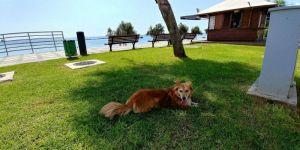 החיים בקפריסין
