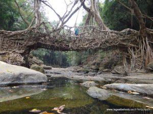 הגשרים החיים בהודו
