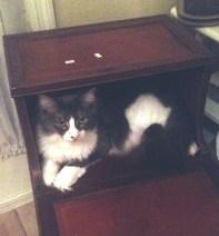 Max_hiding
