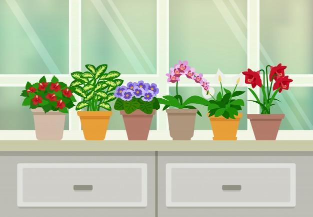 Когда нужно пересаживать комнатные растения