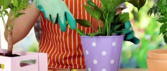 Когда нужно пересаживать комнатные растения: основные правила и советы
