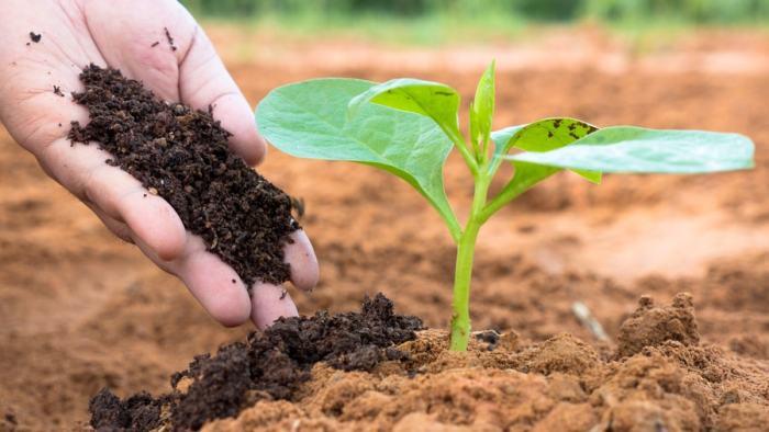 Для чего нужен биогумус и какая от него польза