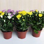 Растения, которые отлично чистят воздух