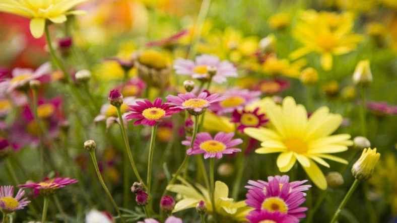 Unnoticed Benefits of Having Plants