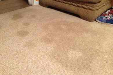 How to Remove Party Stains from Wool Rugs