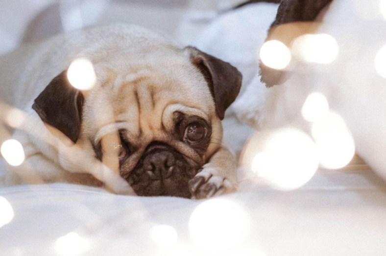 10 Ways to Prevent Electric Hazards with Pets 8