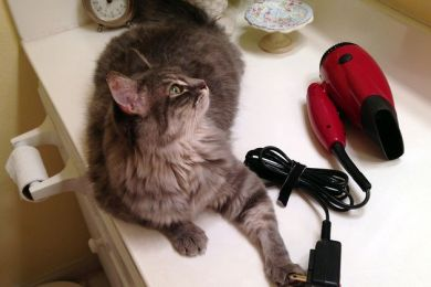 Electric Hazards with Pets
