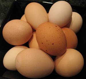 eggs fresh from the farm