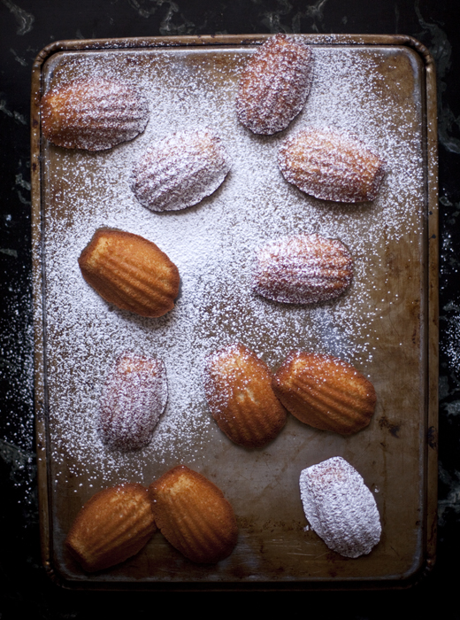 Honey Madeleines | ZoëBakes | Photo by Zoë François