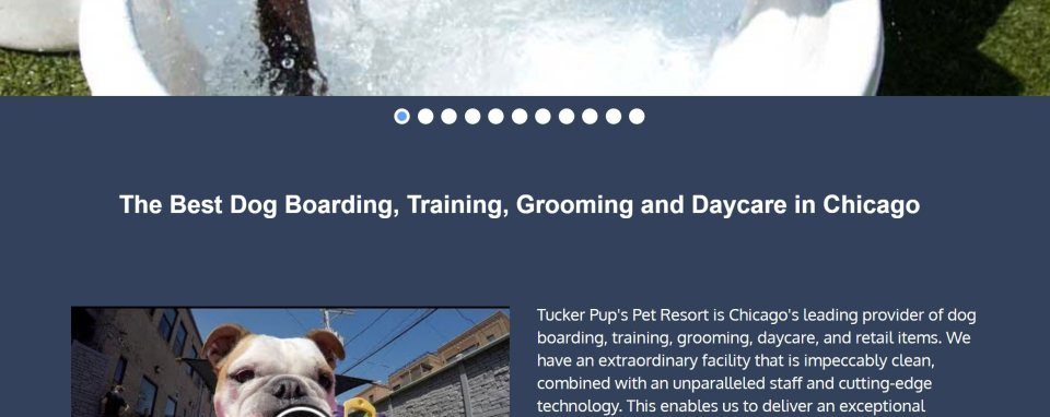 """screenshot showing how to optimize local business websites for SEO using """"[my service] + [my location]"""" titles or H1 tags - dog grooming business"""