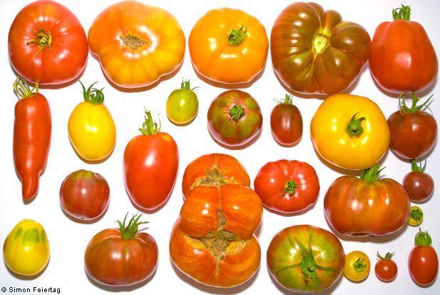 Variedad de tomates