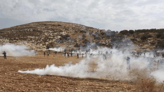 החלה עונת המסיק בשטחים הכבושים: מתנחלים תוקפים חקלאים פלסטינים ומציתים שדות