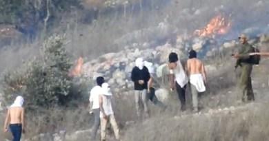 זיתי הזעם: בעיצומו של המסיק בשטחים הכבושים גוברת אלימות המתנחלים