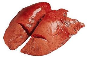 Компресс из свиного легкого при варикозах