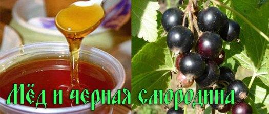 Мед и черная смородина