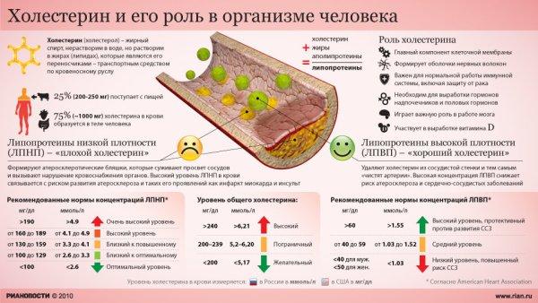Питание пожилых людей - плохой и хороший холестерин