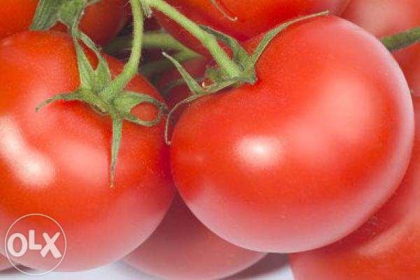 Польза помидор