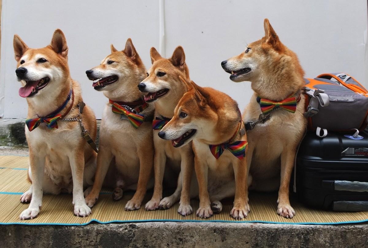 They belong to Tai Ping Shan too - Zolima CityMag