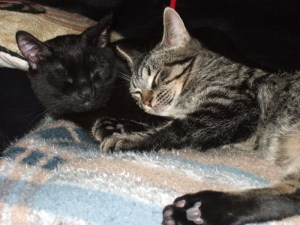 Dexter and Nicholas