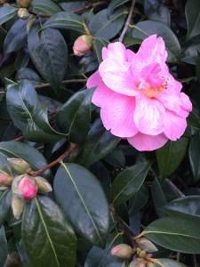 flower-jan2