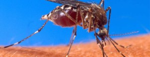 DO MOSQUITOES SPREAD ZOMBIE PLAGUE?