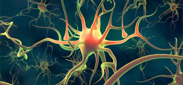 neurons_2