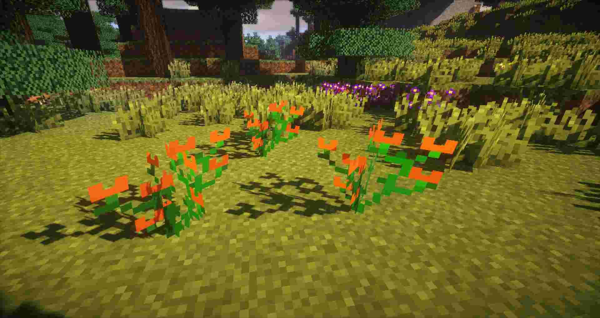 Plants-Mod-9