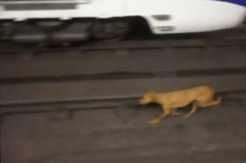 perro metro madrid