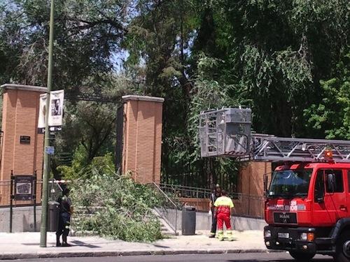 Las ramas tapan las escaleras - A. Molla (Zonaretiro.com)